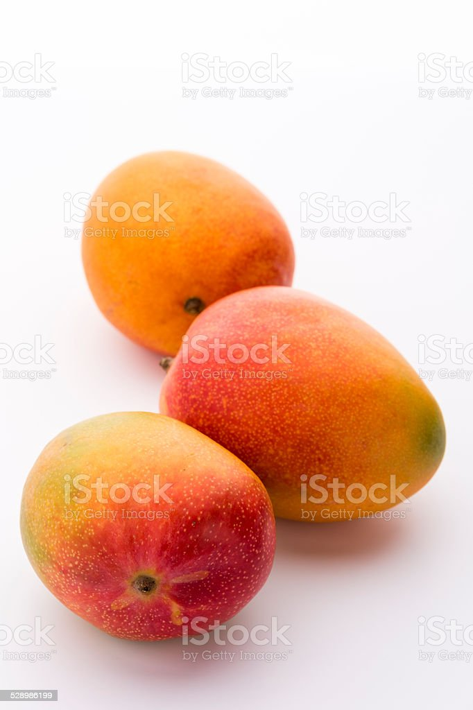 Three Ripe Mangos, Mangifera indica, On White stock photo