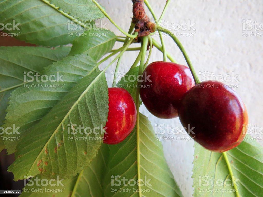 Three ripe red cherries stock photo