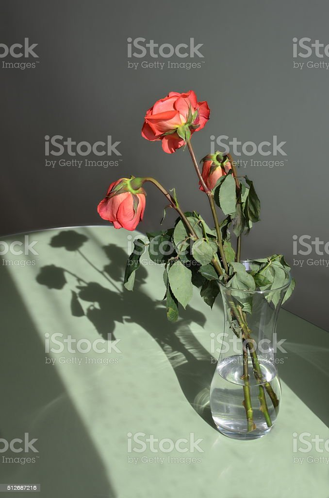 Three roses in a vase and its shadow stock photo