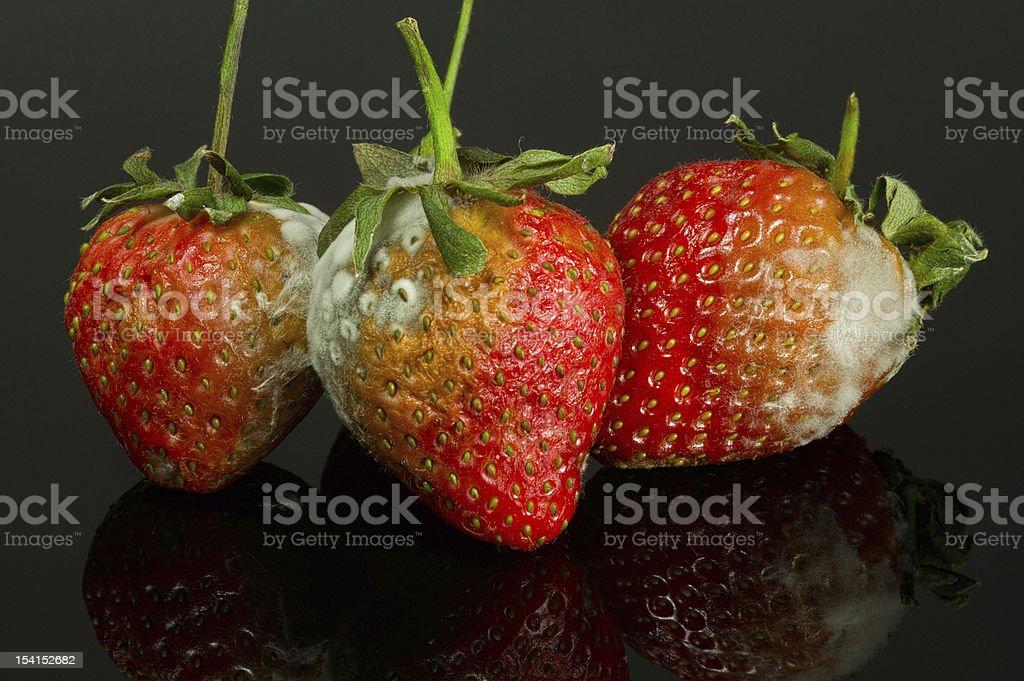 three rotting strawberries royalty-free stock photo