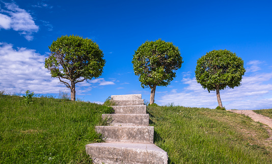Three rounded trees and old stone stair in green grass to blue cloudy sky