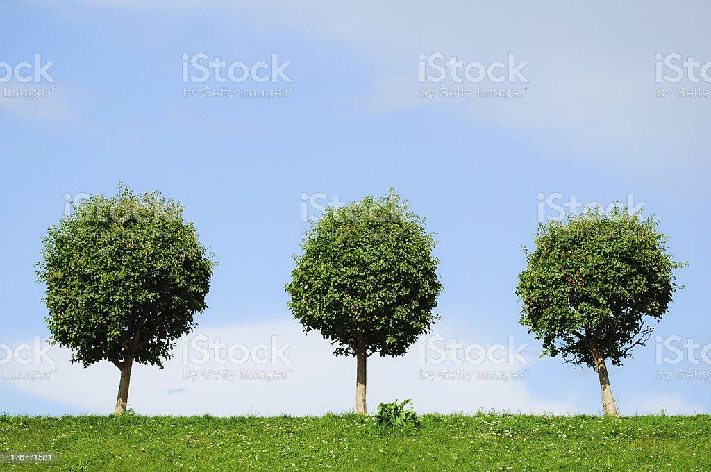 three rounded trees stock photo