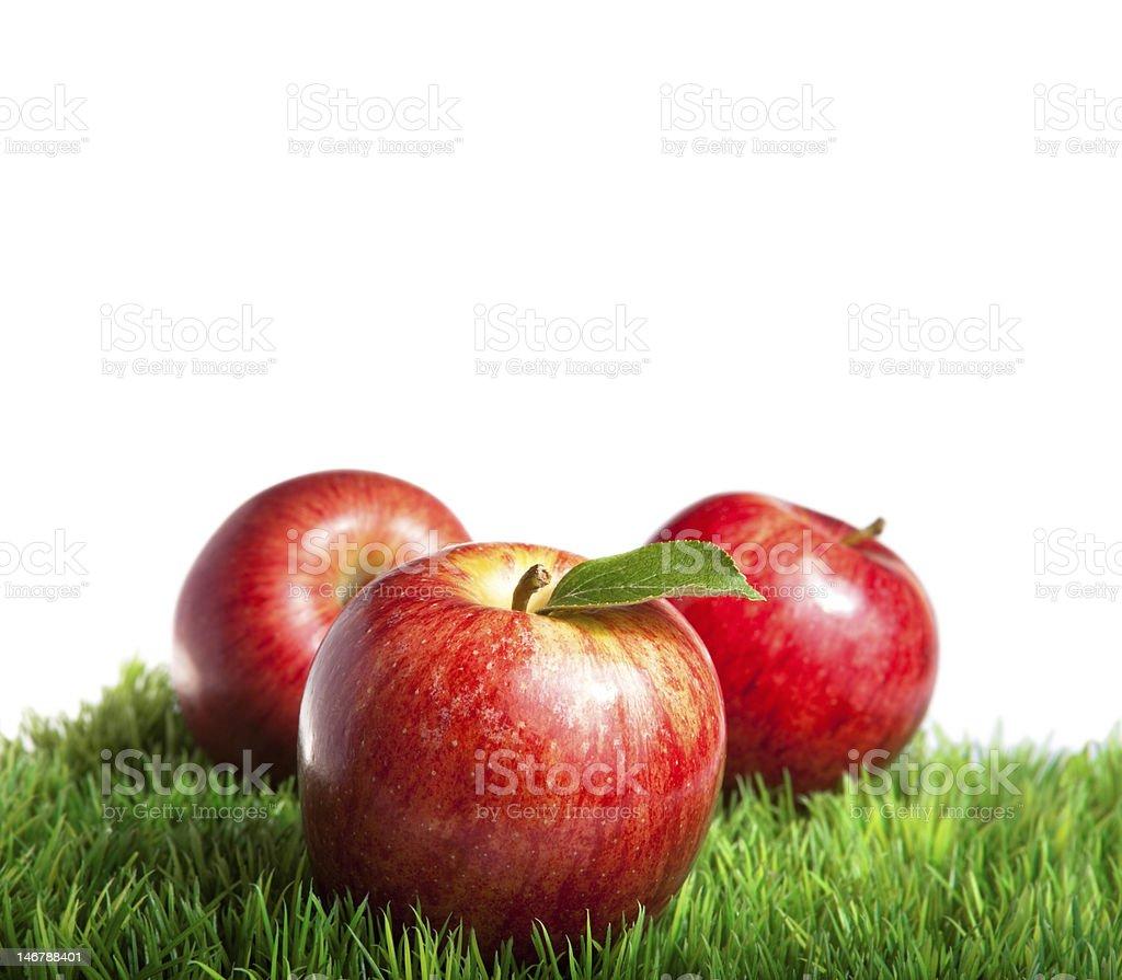 Three royal gala apples on grass stock photo