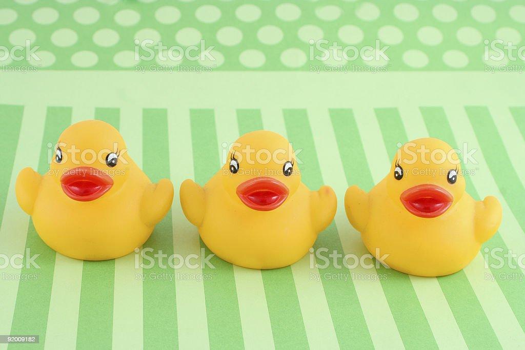 three rubber duckies royalty-free stock photo