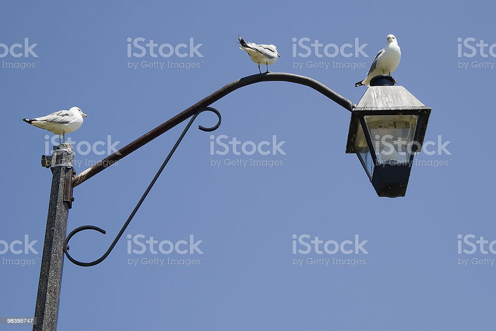 Three sea gulls on a lamp post royalty-free stock photo