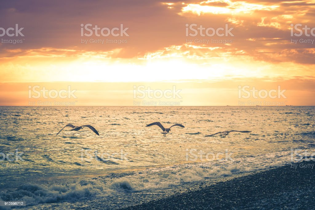 Three seagulls fly along the coastline of the beach on the background of a beautiful sunset. Toned image stock photo