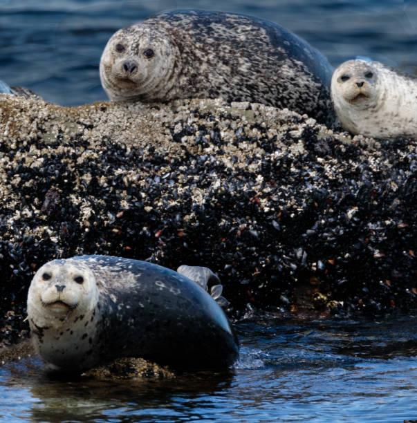 Three Seals stock photo