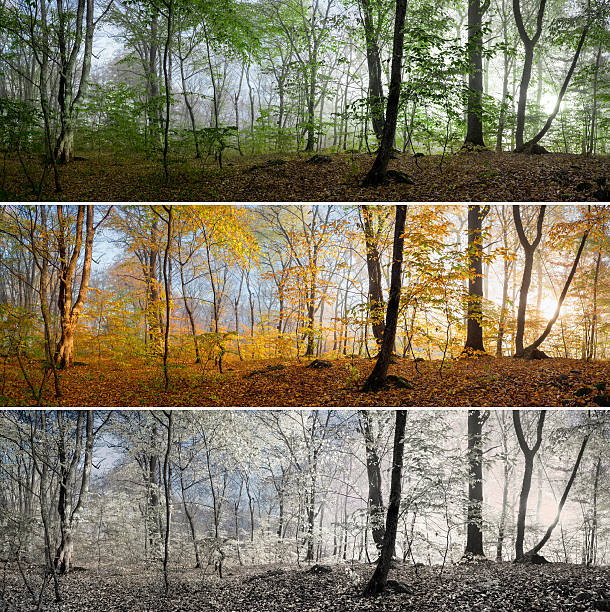 three seasons in the forest panorama - four seasons stock photos and pictures