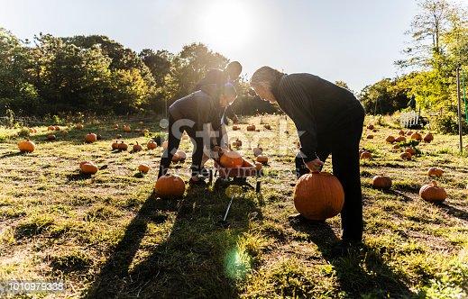 81711567 istock photo Three senior friends picking pumpkins at Pumpkin Patch 1010979338