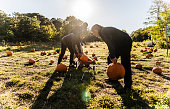 Three senior friends picking pumpkins at Pumpkin Patch in Long Island, New York, USA