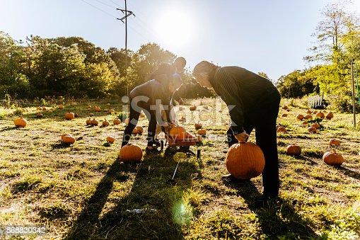 81711567 istock photo Three senior friends picking pumpkins at Pumpkin Patch 868830342