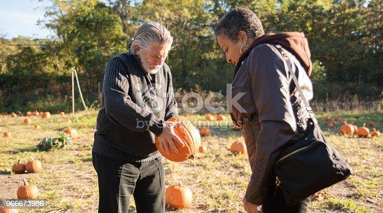 81711567 istock photo Three senior friends picking pumpkins at Pumpkin Patch 966673986