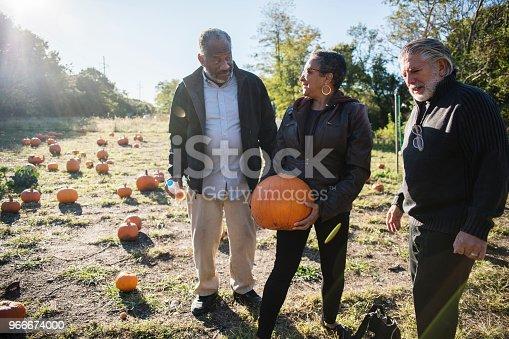 81711567 istock photo Three senior friends picking pumpkins at Pumpkin Patch 966674000