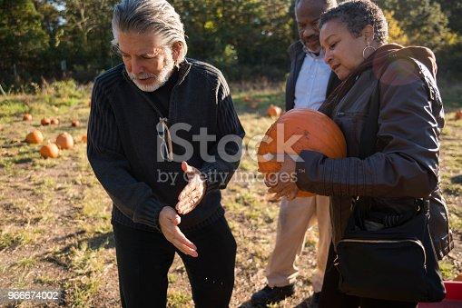 81711567 istock photo Three senior friends picking pumpkins at Pumpkin Patch 966674002
