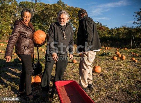 81711567 istock photo Three senior friends picking pumpkins at Pumpkin Patch 966674004