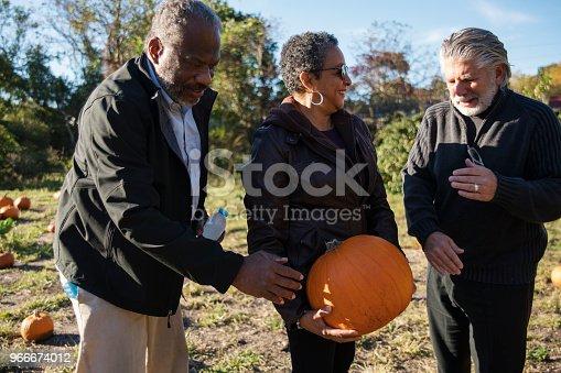 81711567 istock photo Three senior friends picking pumpkins at Pumpkin Patch 966674012