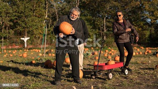 81711567 istock photo Three senior friends picking pumpkins at Pumpkin Patch 966674030