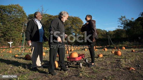 81711567 istock photo Three senior friends picking pumpkins at Pumpkin Patch 966674044