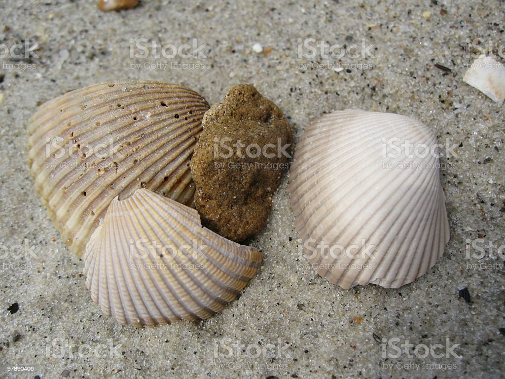 Three Shells And A Rock royalty-free stock photo