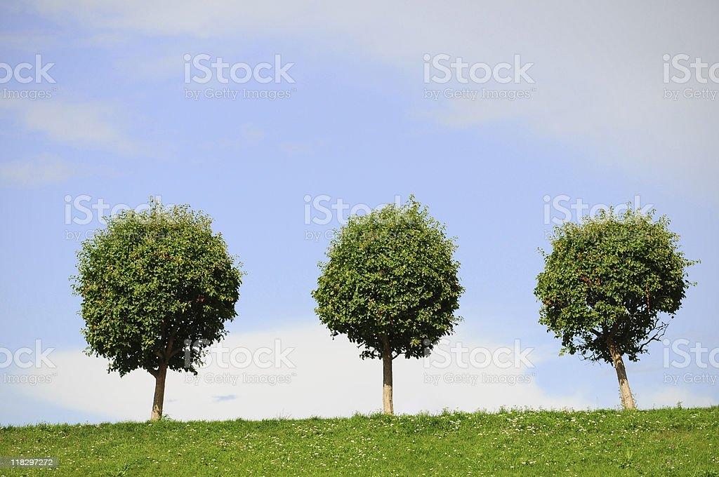 three single trees stock photo