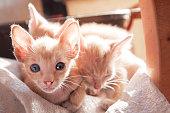 Three sleepy kittens.