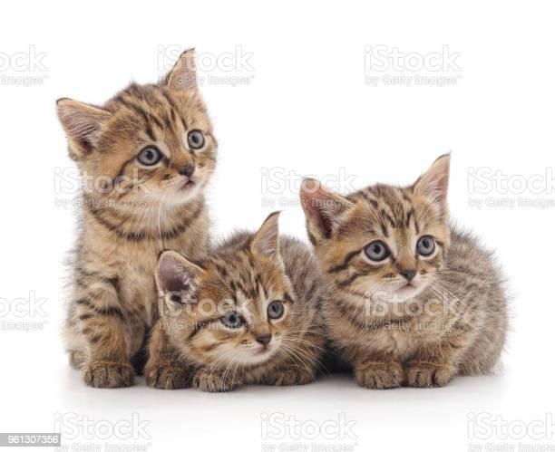 Three small cats picture id961307356?b=1&k=6&m=961307356&s=612x612&h=0wagzcpsijajfeuedpuwpa4iic4 lvxqjpcss uptiw=