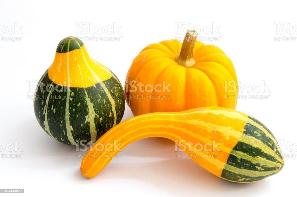 Three small decorative autumn gourds stock photo