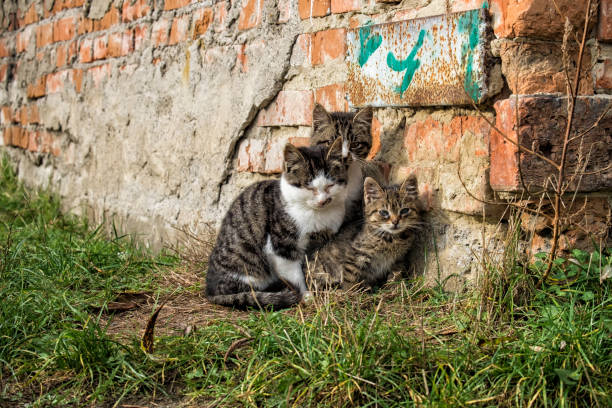 Three small stray kittens are tightly huddled together stock photo
