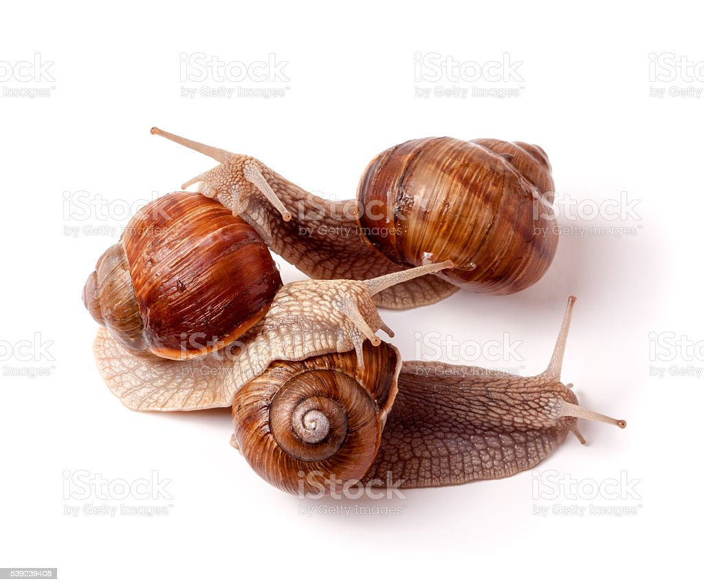 Three snail crawling on a white background closeup royalty-free stock photo