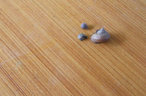 Three snails crawl on the wood