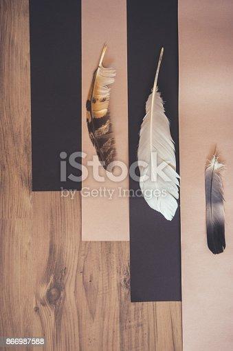 istock Three soft bird feathers in light 866987588