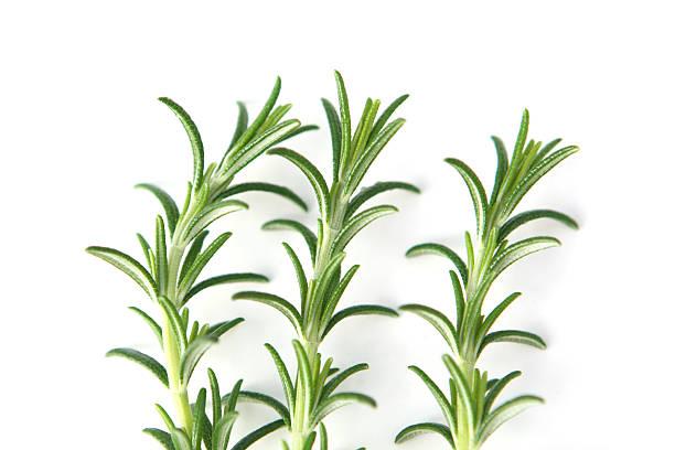Three sprigs of Rosemary