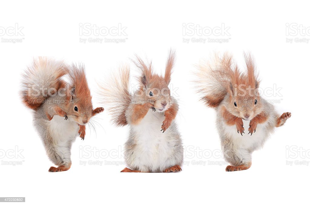 Tres squirrels - foto de stock