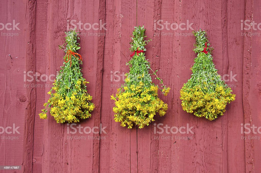 three St Johns wort medical herb bunch on red wall stock photo