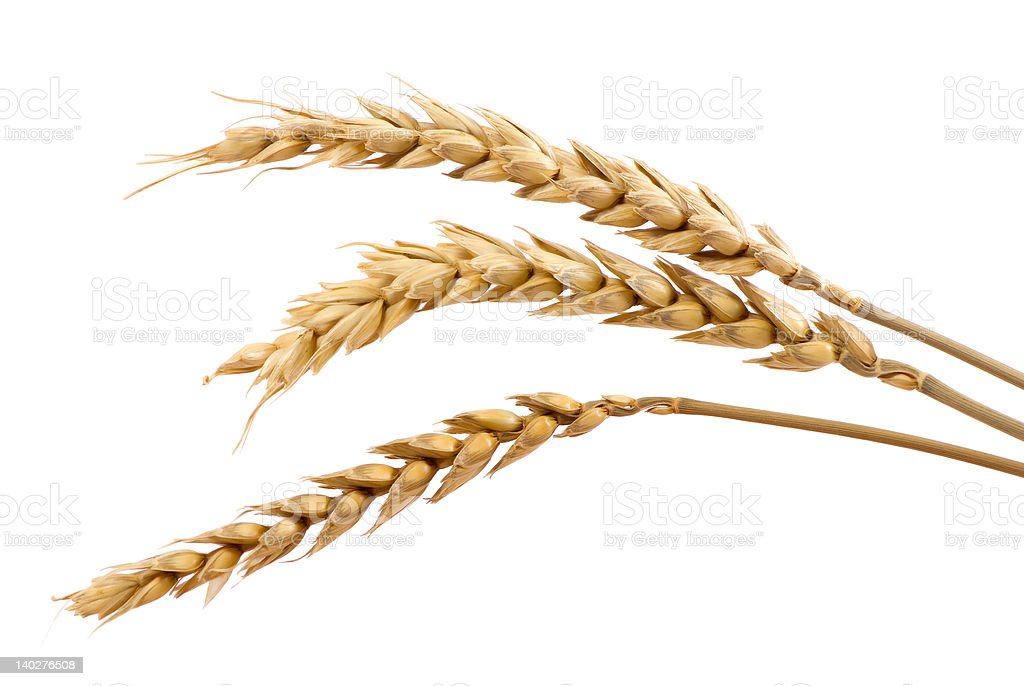 Three stands of wheat stock photo