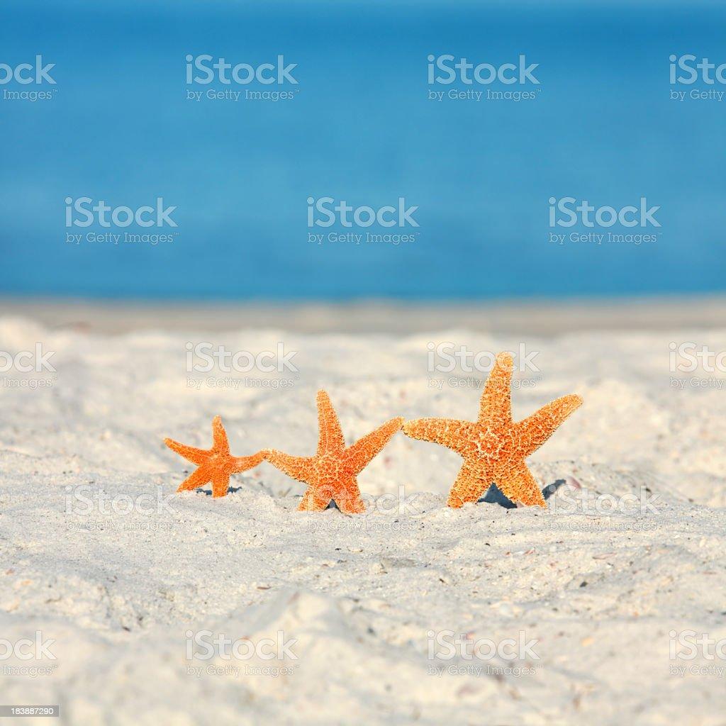 three starfish on beach vacation royalty-free stock photo