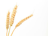 wheat stems isolated on white