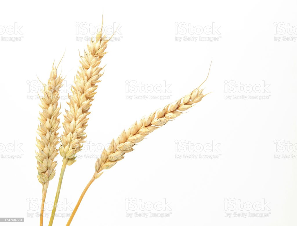 Three stems of wheat on a white background. stock photo