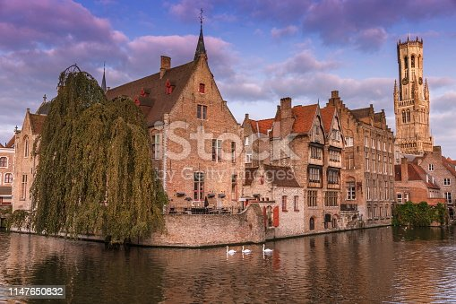 Three Swans floating on the Rozenhoedkaai canal at sunrise – Bruges medieval old town – Belgium