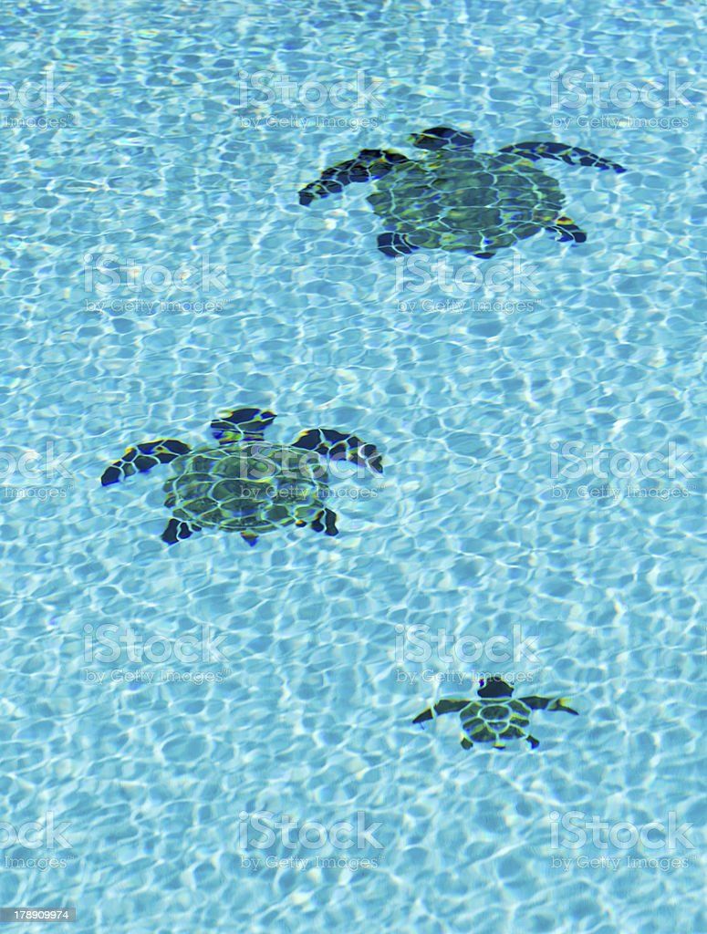 Three Tiled Turtles On Bottom Of Swimming Pool Stock Photo ...