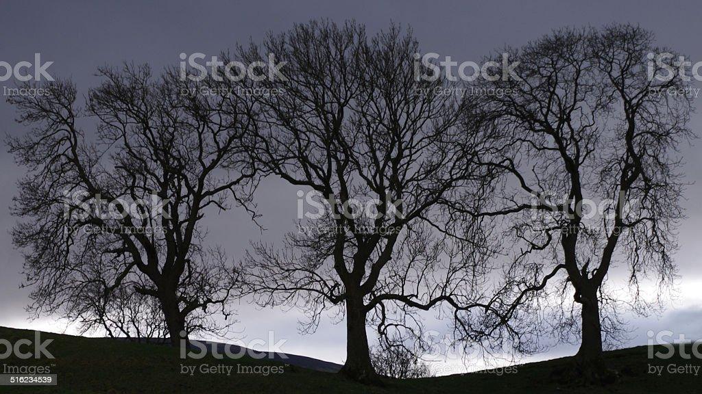 Three Tree silhouette stock photo