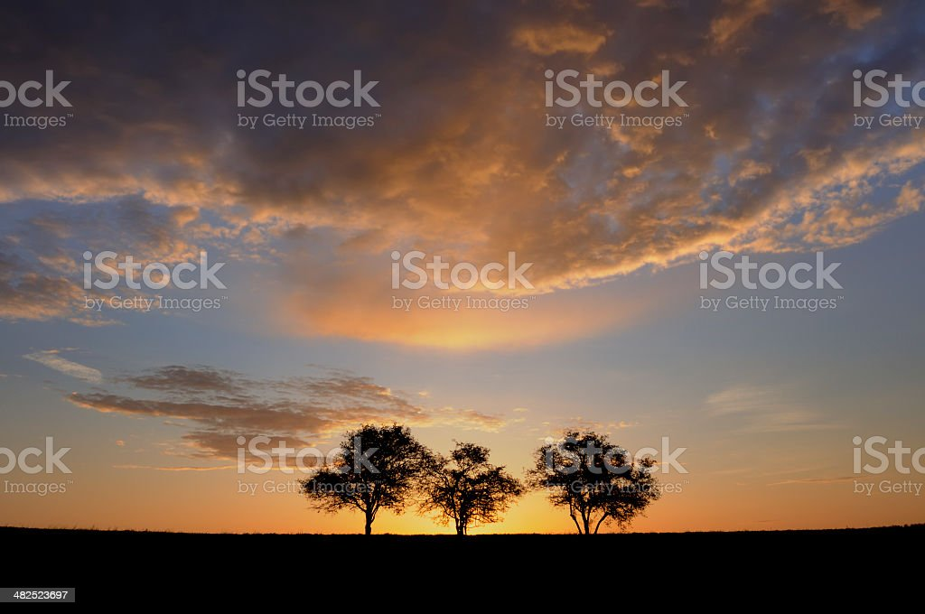 Three Trees and Dramatic Clouds stock photo