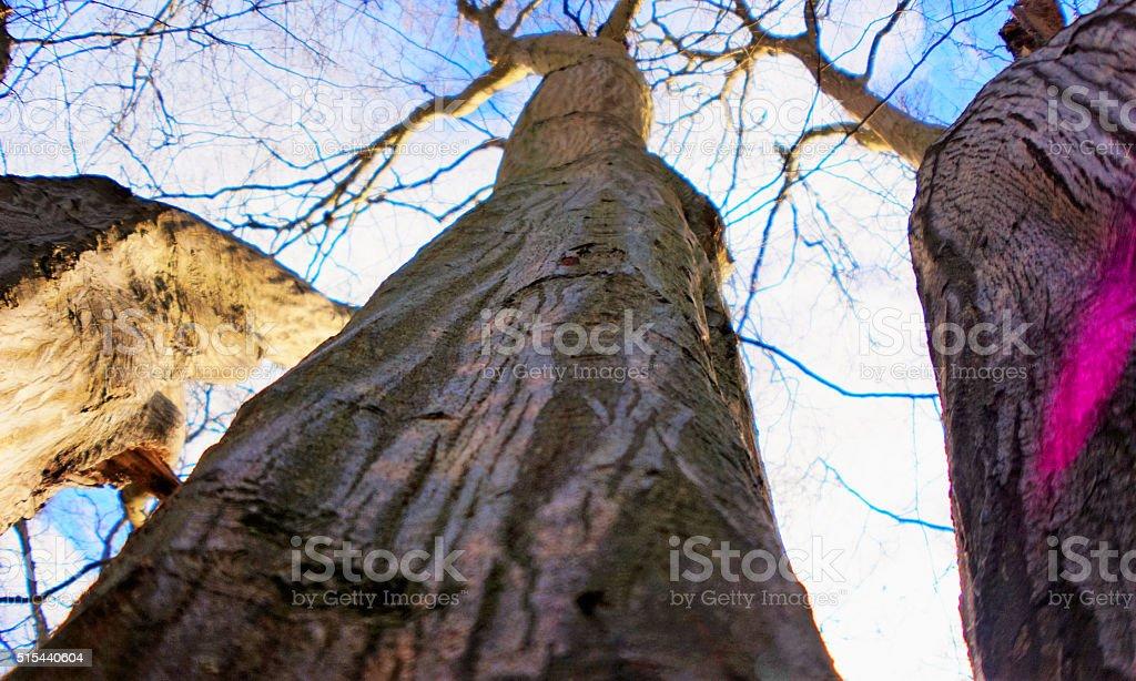 Three trees from below stock photo