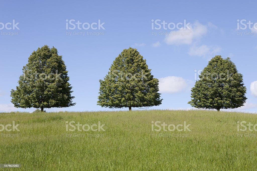 Three Trees In A Field stock photo