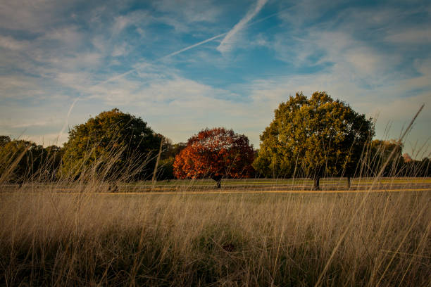 three trees in line - richmond park stock photos and pictures