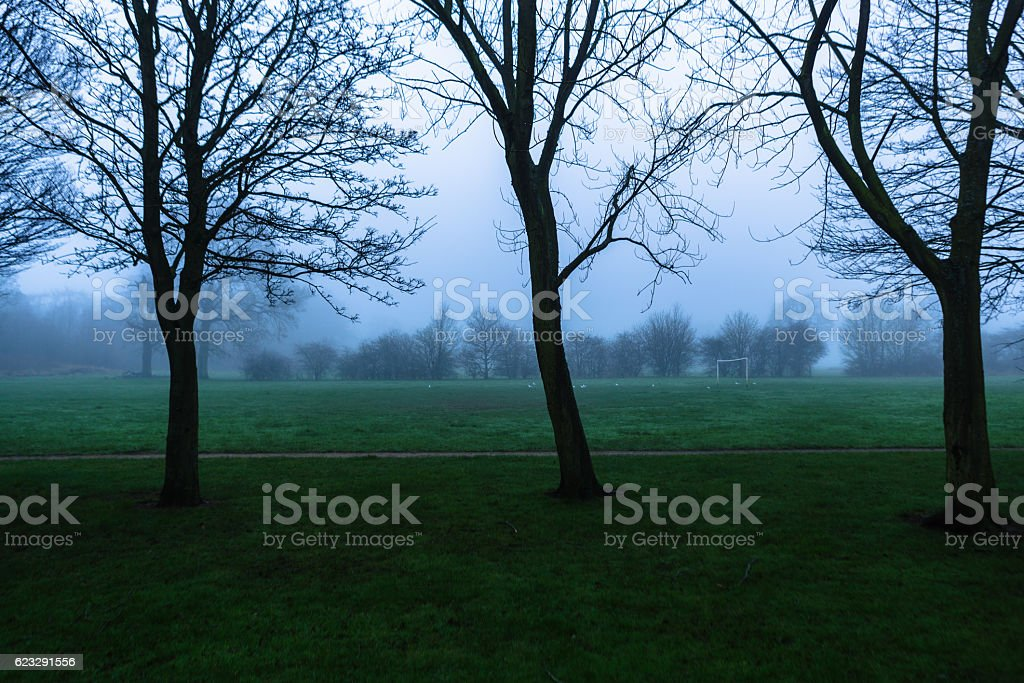 Three trees in misty frost covered field stock photo