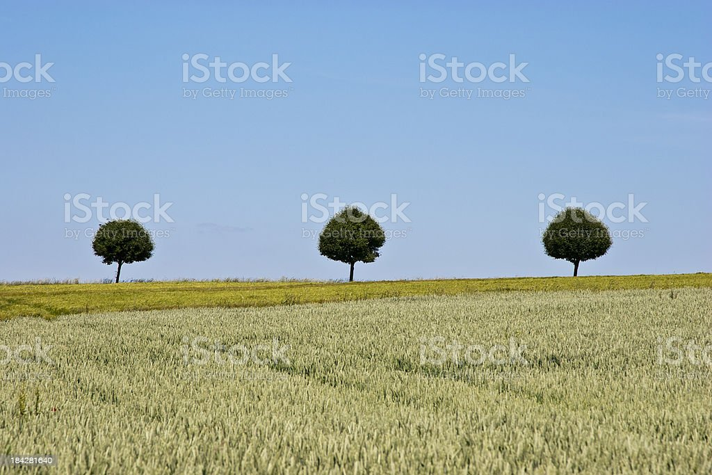Three trees in the field stock photo