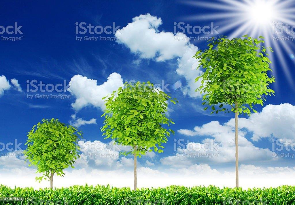 three trees royalty-free stock photo