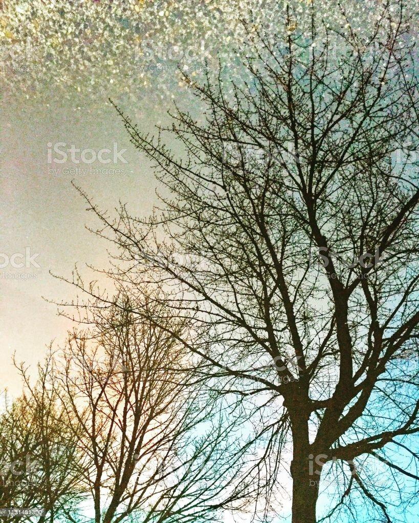 Drei Bäume reflektieren – Foto