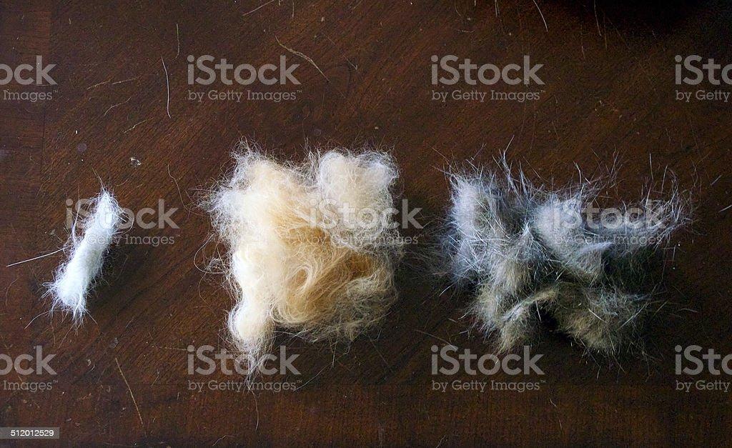 three types of cat fur stock photo